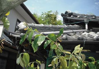 雨で下地の木部が腐るのを防ぐために瓦補修。