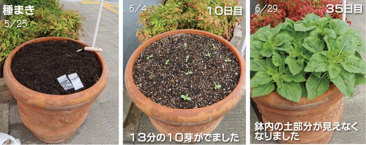 106p01_001himawari.jpg