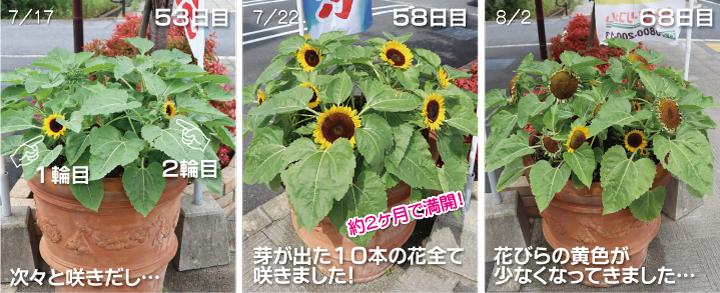 106p01_002himawari.jpg