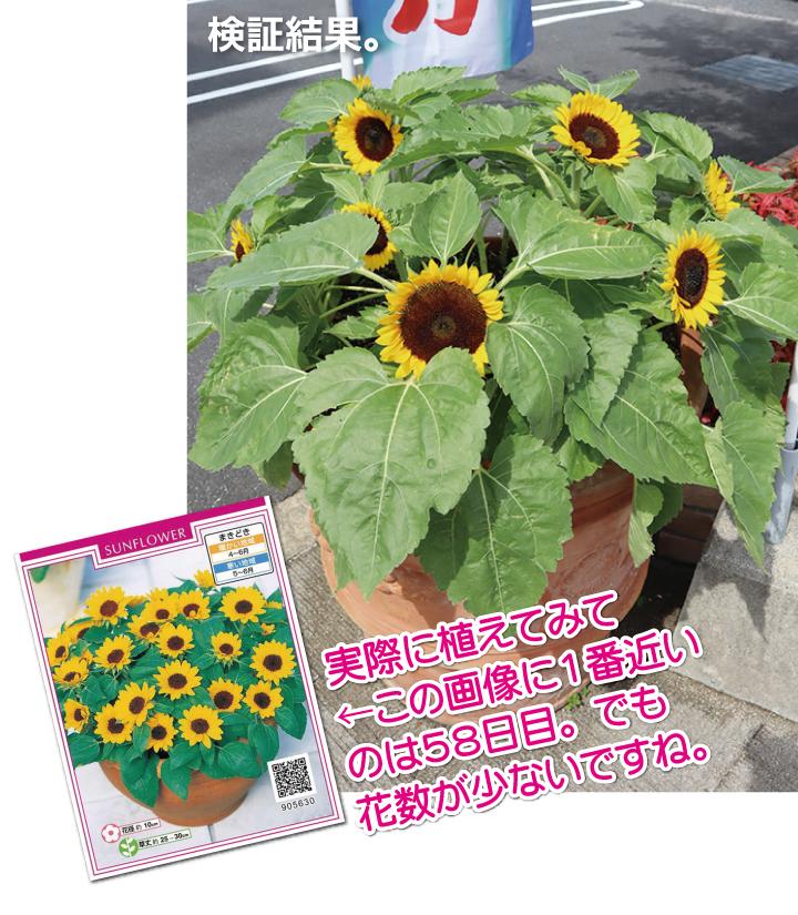 106p01_005_02himawari.jpg